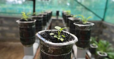 hydroponie maison hydroponie tomate hydroponie bio hydroponie diy